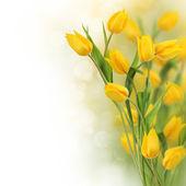 Tulip flowers design border — Stock Photo