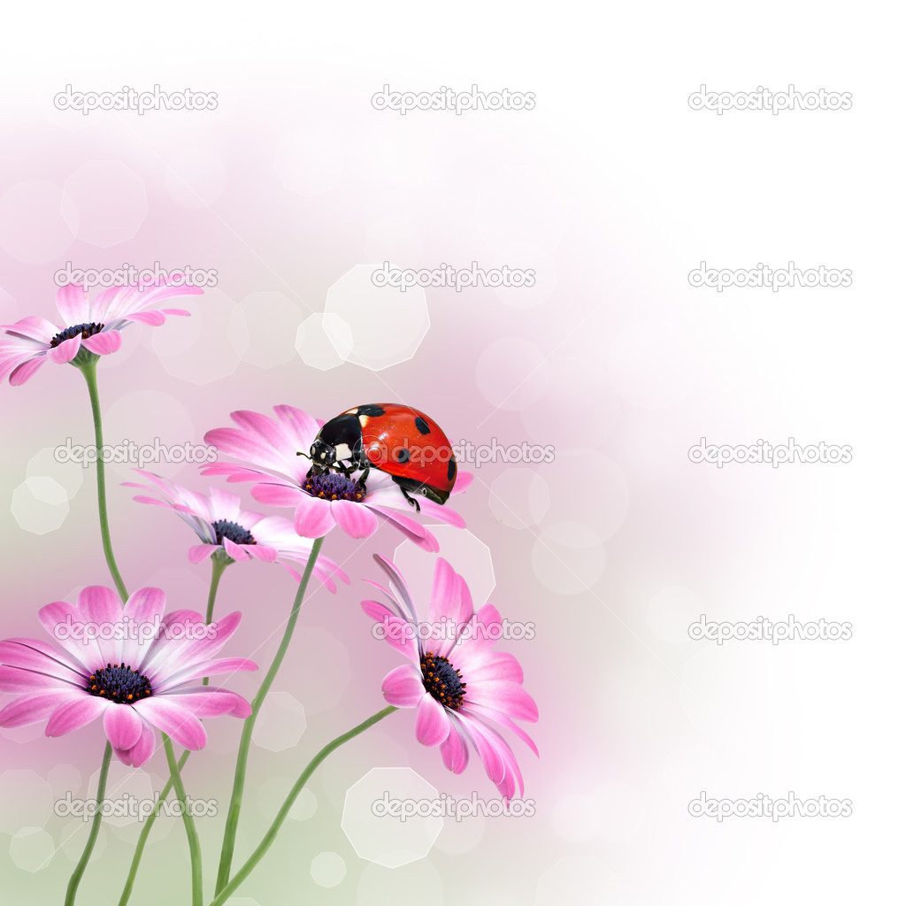 Ladybug on pink flowers design border with copy space  Stock Photo #8513947