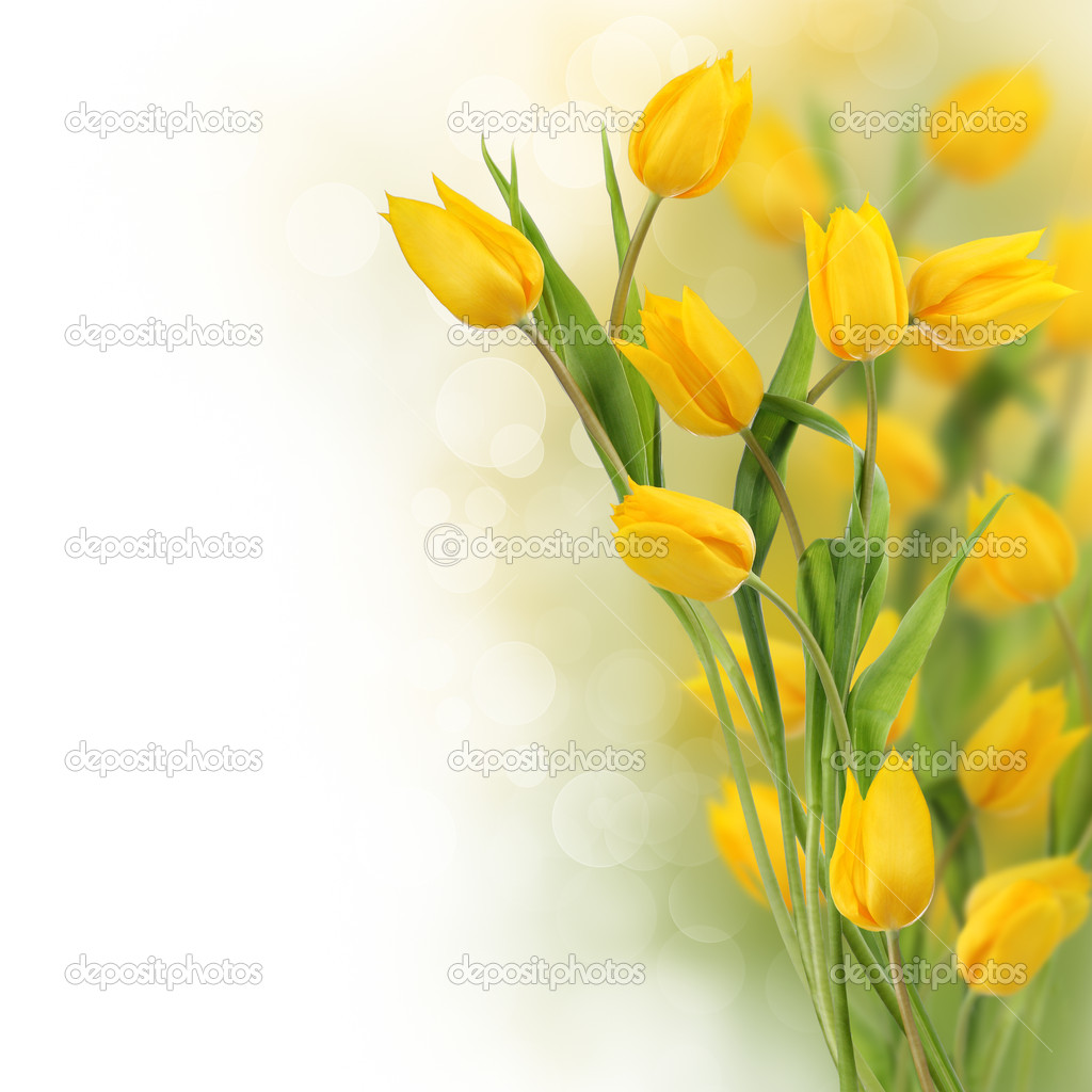 Yellow tulips design border with copy space — Stock Photo #8514038