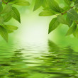 Green leaves design background — Stock Photo