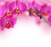 Orchids design border with copy space — Stock Photo