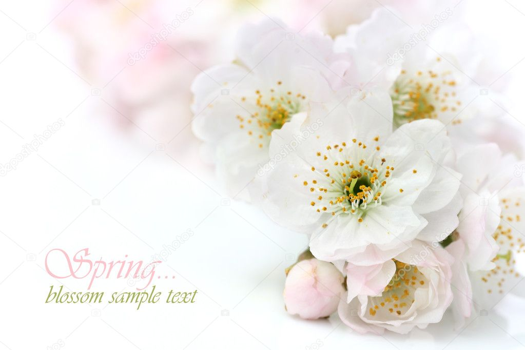 Spring blossom with copy space — Stock Photo #8878428