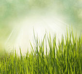Nature background with grass. Vintage style — Stock Photo