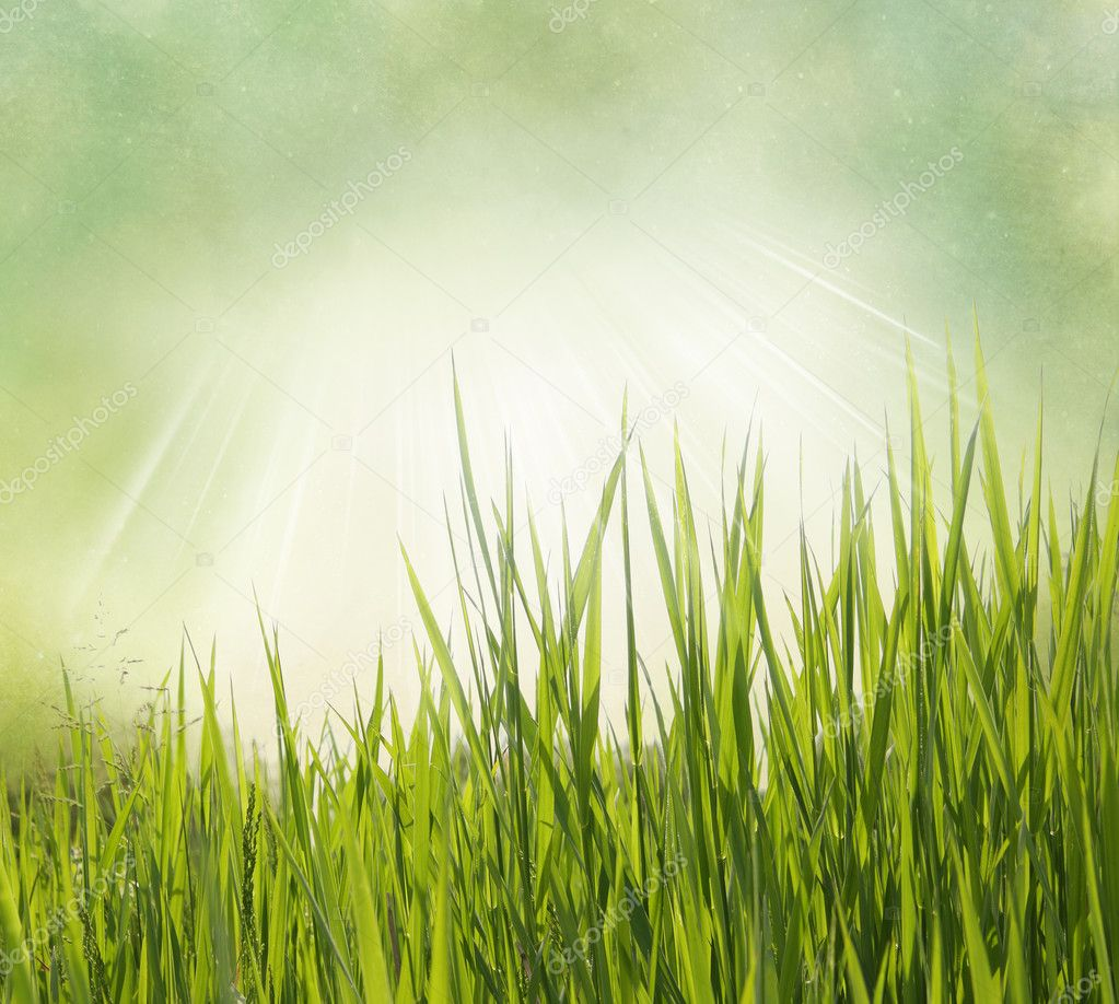 Nature background with grass. Vintage style  Stock Photo #8909825