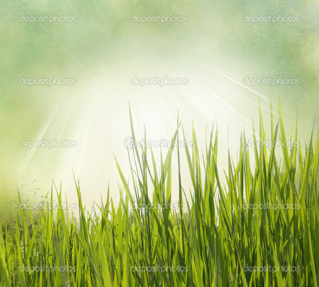 Vintage Photo Of Grass: Nature Background With Grass. Vintage Style