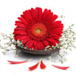 Gerbera flower on spa spoon - Stock Photo
