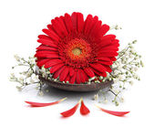 Gerbera flower on spa spoon — Stock Photo
