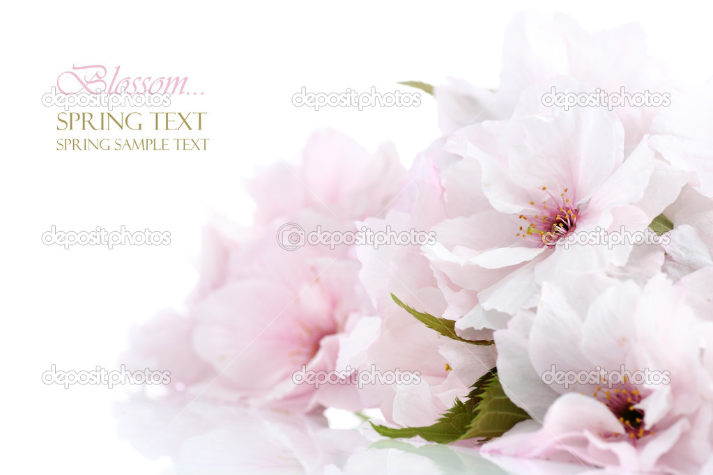 Cherry blossom border with copy space (shallow DOF) — Stock Photo #9272126