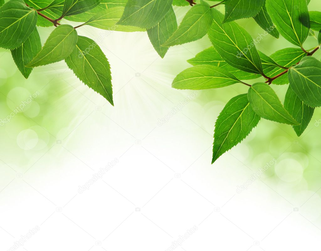 Green leaves border with bokeh and copy space — Stock Photo #9272153