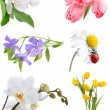 Flower collage — Stock Photo #9456286