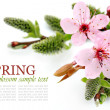 Spring flowers and pussy willow arrangement — Stock Photo