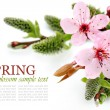 Spring flowers and pussy willow arrangement - Stock Photo