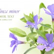 Vinca minor flowers design border — Stock Photo