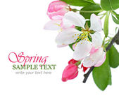 Spring flowers border — Stock Photo