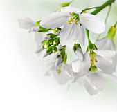Spring flowers border — Stock Photo