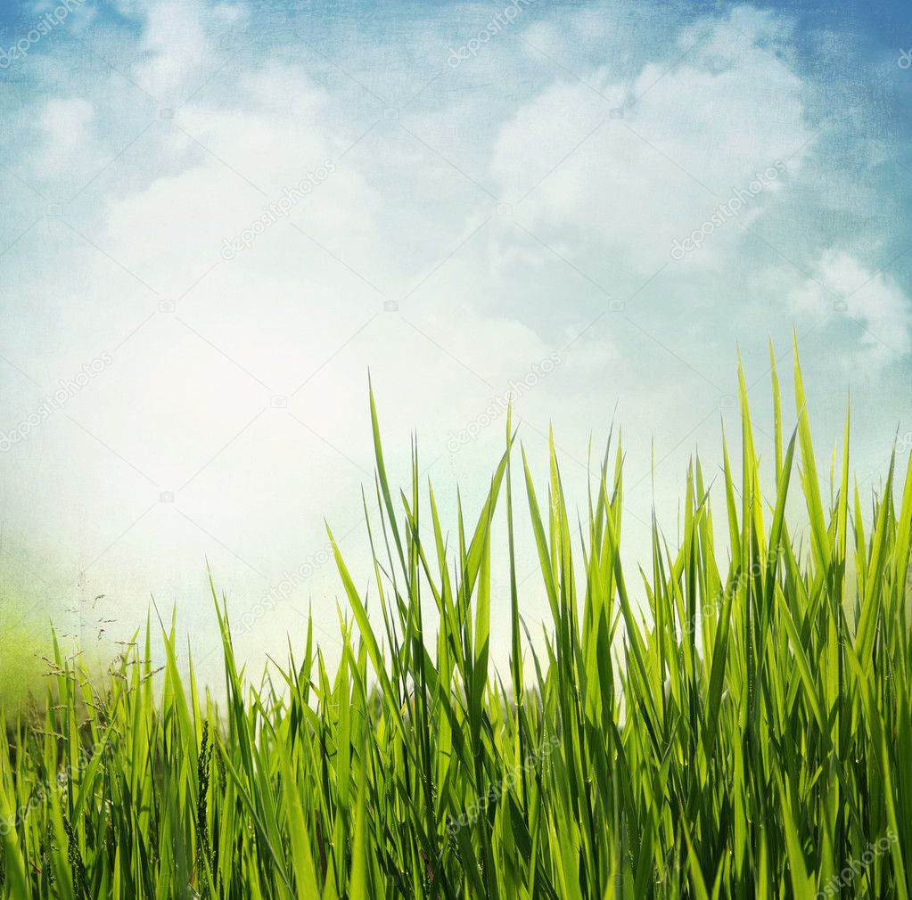 Textured nature background with grass and blue sky. Vintage style  Stock Photo #9700714