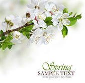 Segundo plano da borda design de flores da primavera — Foto Stock