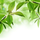 Summer or spring border background design with green leaves — Stock Photo