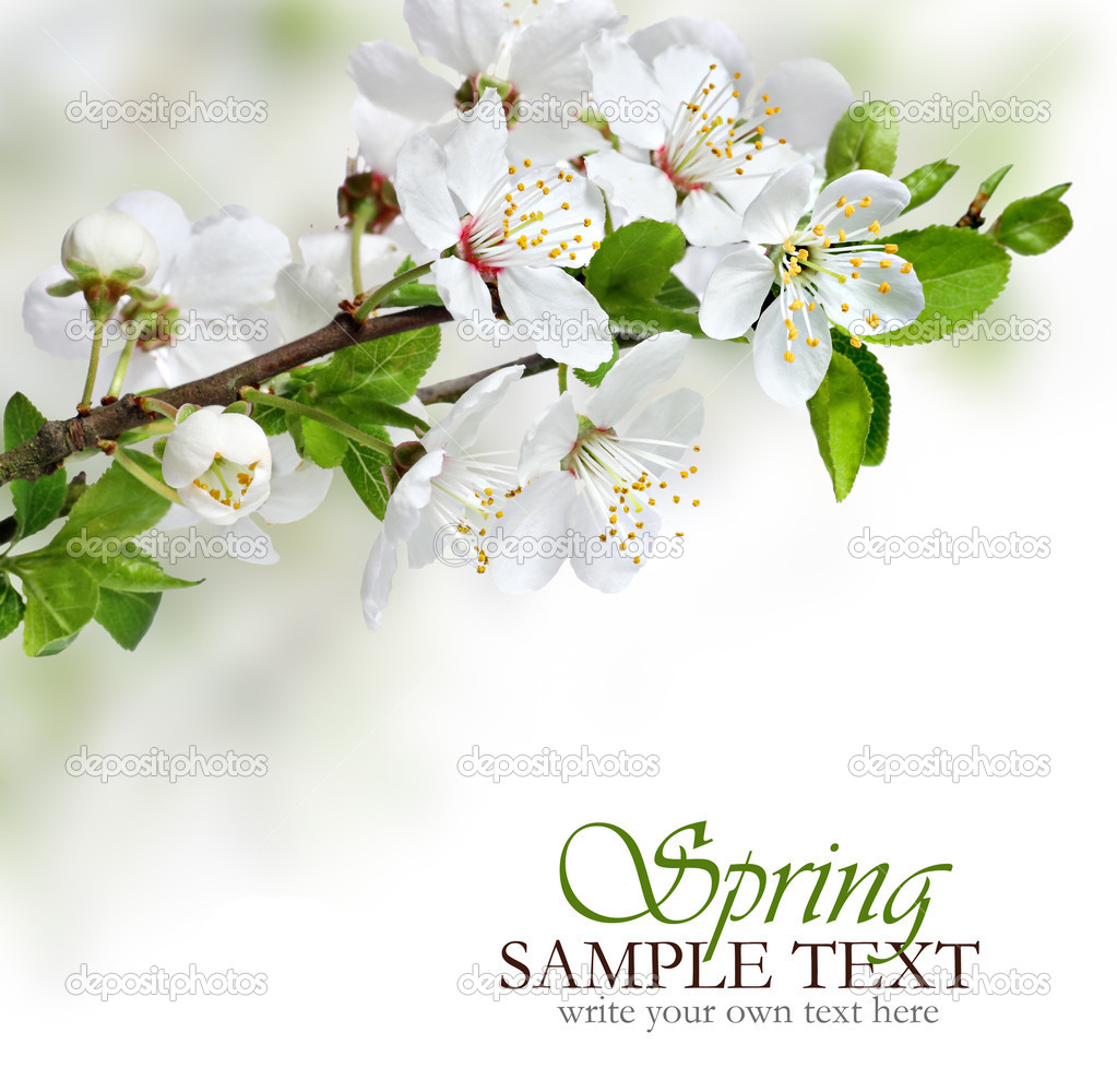 美丽的春天的花朵设计边框或背景与副本空间