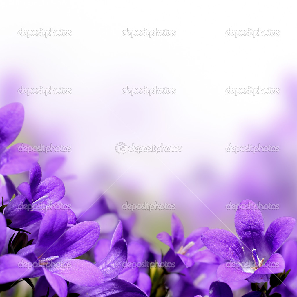 Beautiful campanula spring flowers design border or background with copy space — Stock Photo #9819627