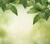 Green leaves border on grunge textured background — Stock Photo