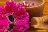Flower gerber daisy and mortar wood, composition zen, close up — Stock Photo