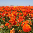 Orange flowers background - Stock Photo