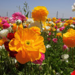Stock Photo: Colourful summer flowers mix.