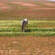 A lone donkey - Stock Photo