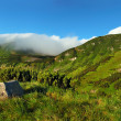 Stock Photo: Panoramof Carpathians