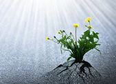Bright Hope of Life — Stock Photo