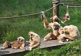 Joyful Monkey Family — Stock Photo