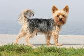 太陽の下での小さな犬をカットします。 — ストック写真