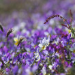 Stock Photo: Purple Flower Bed