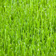 Cut grass — Stock Photo #8041256