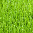 Cut grass — Stock Photo