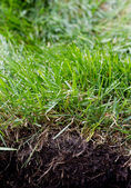 Grass sod — Stock Photo
