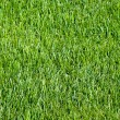 Green grass — Stock Photo #8536774