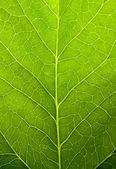 Green leaf nature background — Stockfoto