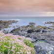 Coastal landscape in spring. — Stock Photo