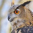 Royalty-Free Stock Photo: Eagle Owl.
