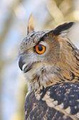 Eagle Owl. — Stock Photo