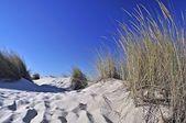 Dunas en el desierto — Foto de Stock