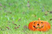 Halloween. — Stockfoto