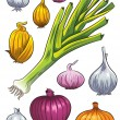 Onion Collection — Stock Vector