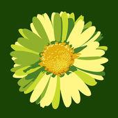 Daisy flower abbildung. vektor-hintergrund. — Stockvektor
