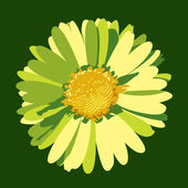 дейзи цветок иллюстрация. векторный фон. — Cтоковый вектор