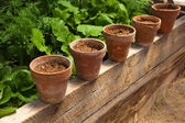 Terracotta pots with soil — Stock Photo