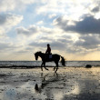 Silhouette of Horse Rider Galloping on the Beach - Foto de Stock