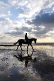 Silhouette of a Horse Rider Walking on Beach — Foto Stock